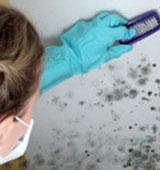 Как избавиться от плесени в ванной, средства и методы